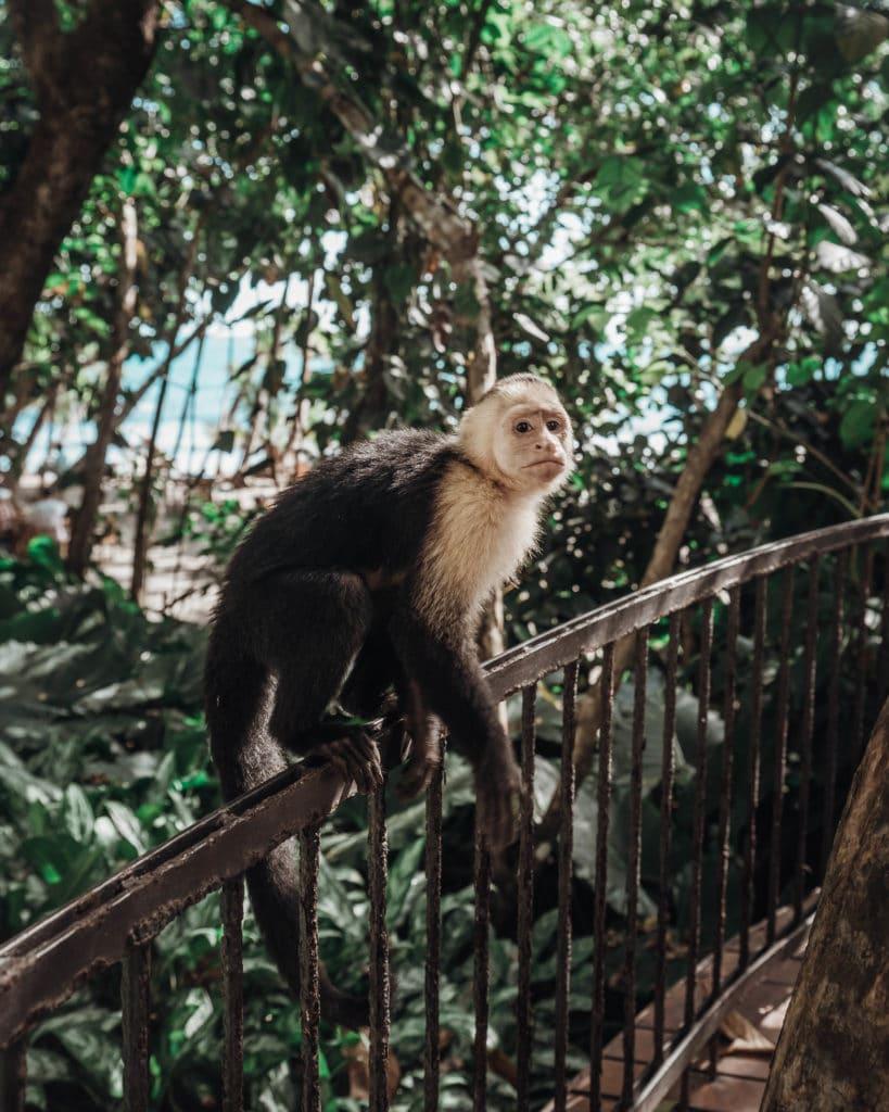 pays-eco-tourisme-biodiversite-costa-rica