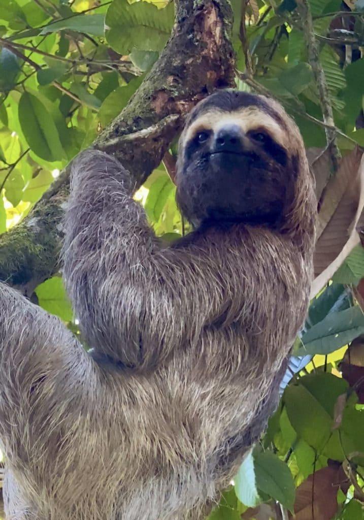 voir-paresseux-planifier-voyage-costa-rica
