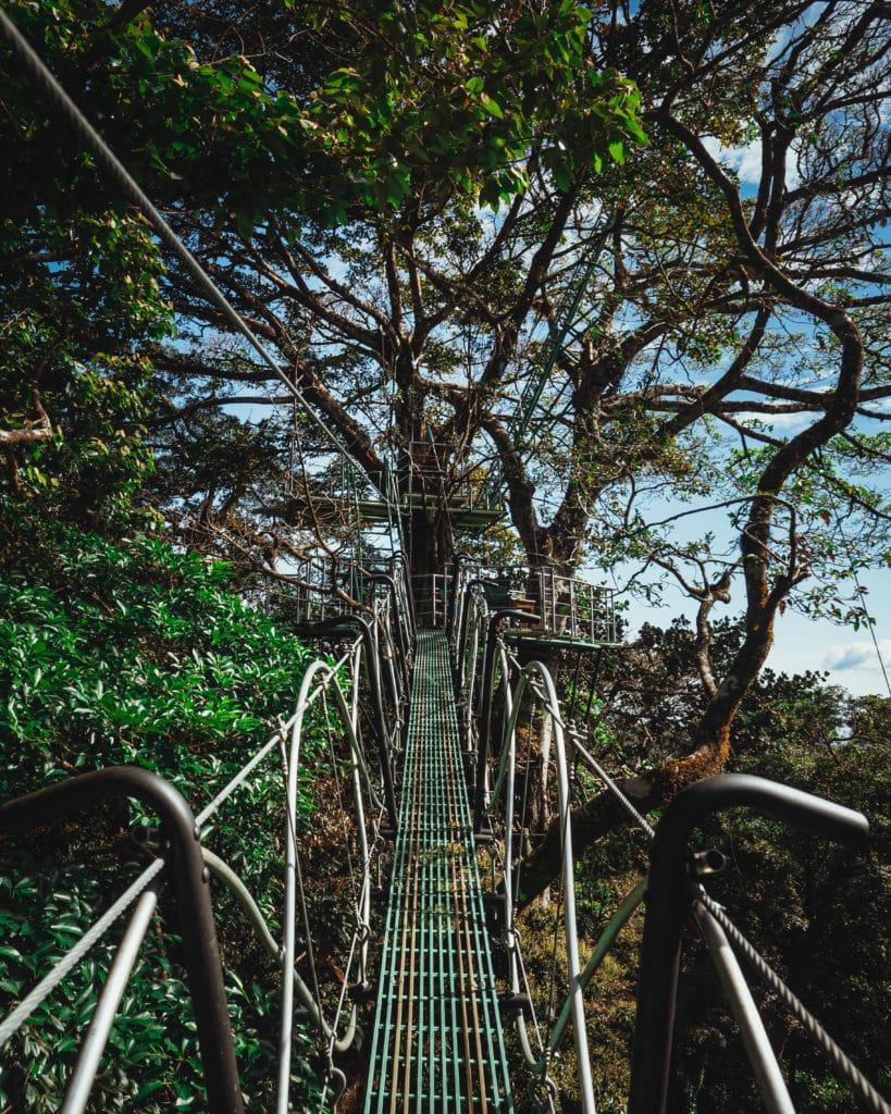 Savia_Costa_Rica_Monteverde_experience_arbres