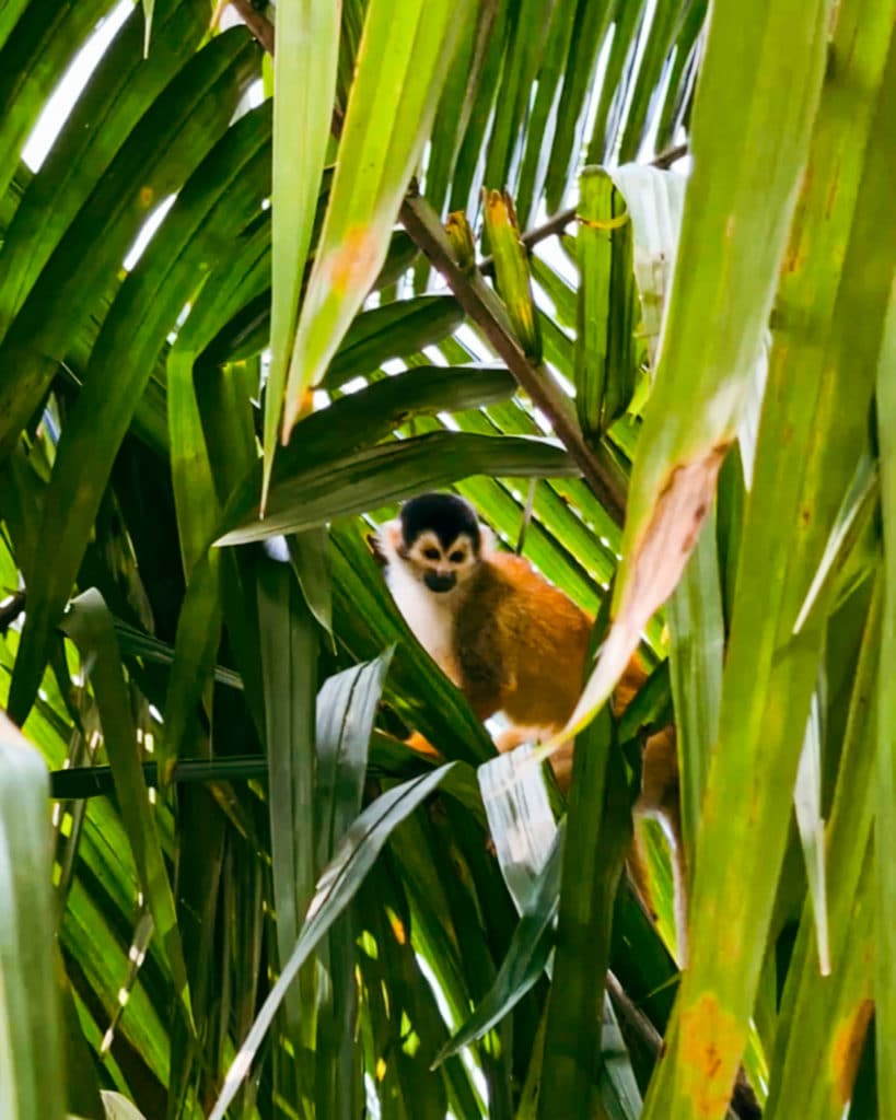 mangrove-Sierpe-Uvita-Costa-Rica